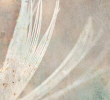 Feather Touch ~ by Emma  Wertheim