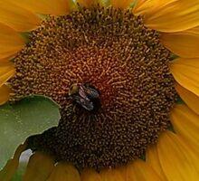 Bee love the sunflower Sticker