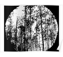 Through the Greyscale Forest Poster