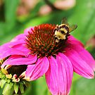 Bee My Honey by Lani Chipman