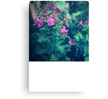 Little Purple Flowers Canvas Print