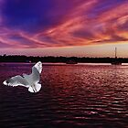 Dark Coloured Sunset with bright Seagull. Photo Art. by sunnypicsoz