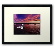 Dark Coloured Sunset with bright Seagull. Photo Art. Framed Print