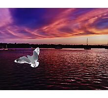Dark Coloured Sunset with bright Seagull. Photo Art. Photographic Print