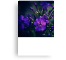 Purple Illumination Canvas Print