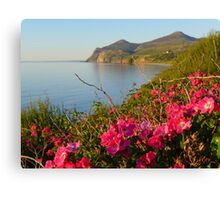 Rambling roses and Yr Eifl ( The Rivals) from Nefyn  Canvas Print