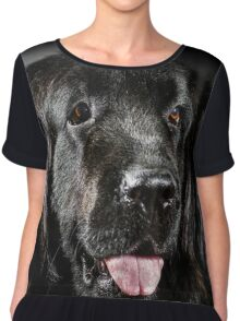 Portrait of big black water-dog, studio shooting, isolated on dark background Chiffon Top