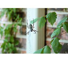 BAMF Spider Photographic Print