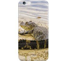 Alligator sunning iPhone Case/Skin