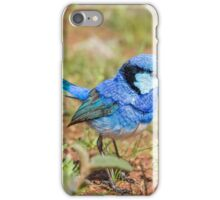 Australian Splendid Fairy-Wren iPhone Case/Skin