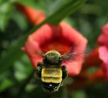 Trumpet Bumble by Cecilia Carr