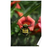 Trumpet Bumble Poster