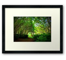 Plantation Path Framed Print