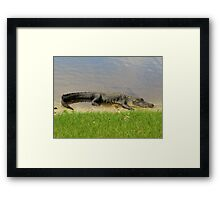 Nice and quiet Framed Print