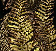 Golden Ferns by Barbara Wyeth