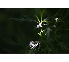 two patches of sunlight in granny's garden Photographic Print