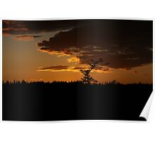Orange Sky Over Lone Tree Poster