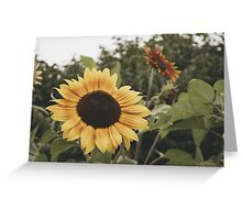 Of Yellow Greeting Card
