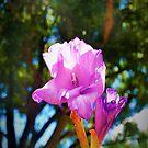 Purple bloom against the canopy by ♥⊱ B. Randi Bailey