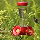 Feeder with a Touch of Hummingbird by Adam Bykowski