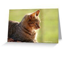 SUNRISE PROFILE CAPTURE - The African Wild Cat - Felis silvestris lybica Greeting Card