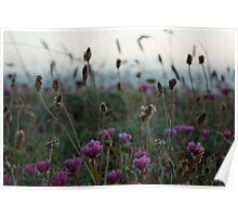 Sea Bluff Flowers Poster