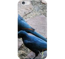 THE COUPLE -RED-WINGED STARLING - Onychognathus morio - ROOIVLERKSPREEU iPhone Case/Skin