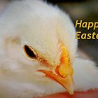 Happy Easter Chick by ?? B. Randi Bailey
