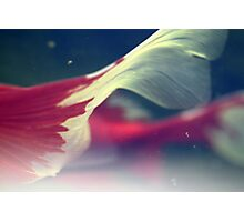 A tail of two fishies ~  Photographic Print