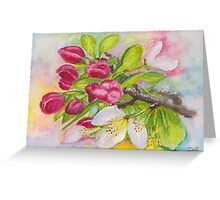 Apple blossom buds on a greeting card Greeting Card