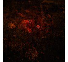 Bloodflower Photographic Print
