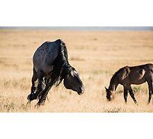 A Snaking Stallion Photographic Print