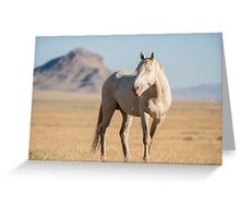 A Solitary Cremello Stallion  Greeting Card