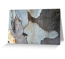 Trunk Of A Eucalyptus Tree Greeting Card
