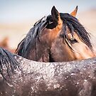 Wild Mustangs of Utah - 2015 by Kelly Jay