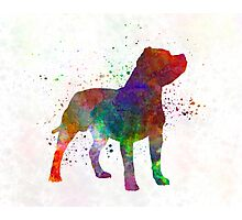 Staffordshire Bull Terrier in watercolor Photographic Print