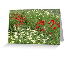 Springs beauty Greeting Card