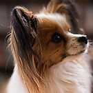 Papillion 20160905 7456  by Fred Mitchell