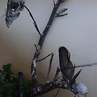 Two dead bird skulls in one dead tree by edend