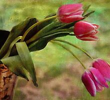 Tulipanes by Yasmin Simpson