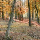 Autumn In The Park by RickDavis