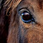 Look into the soul of a horse by Adrian Kent