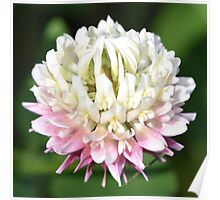 One Clover Flower | Nature Photography Poster