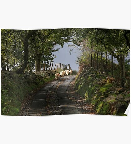 Rural Scene With Sheep Poster