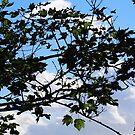 Garden View...........Lyme Dorset UK by lynn carter