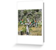 Australian King Parrots on Clothesline Greeting Card