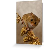 Mousie Greeting Card