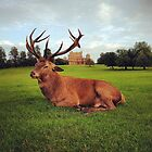 Red deer stag at Wollaton Hall by antarcticpip