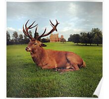 Red deer stag at Wollaton Hall Poster
