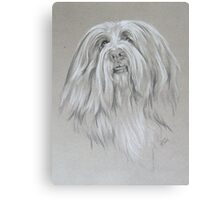 Bearded Collie Canvas Print